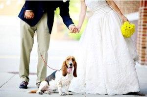 wedding-dog-sitter (1)